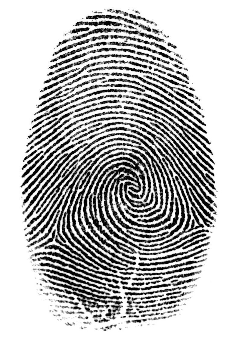 fingerprints San francisco (reuters) - fingerprints and dna evidence from the northern california home where an eight-year-old girl was stabbed to death over the weekend, apparently by an intruder, were sent.